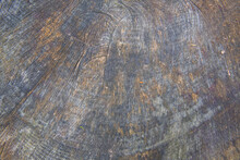 Weathered Tree Trunk Cross Sec...