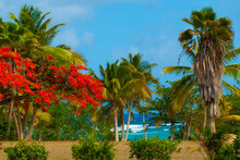 A Stunning Caribbean Scene With A Red Poinciana Tree Against The Background Of Green Palm Trees And The Blue Ocean And Sky