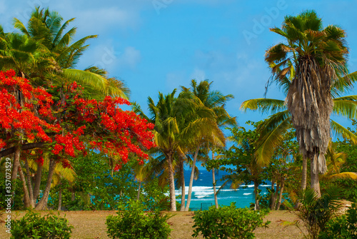 Fotografie, Obraz A stunning Caribbean scene with a red poinciana tree against the background of g