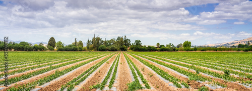 Fotografija Panoramic view of agricultural field in South San Francisco Bay Area; Gilroy, Ca