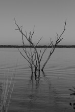 Branches Of A Dead Tree Submerged In Lake