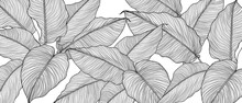 Hand Drawn  Leaves Line Arts Ink Drawing Background, Abstract Leaf Vector Pattern, Tropical Leaves Design For Fabric, Wrapping Paper And Prints, Vector Illustration.