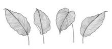 Exotic Tropical Leaf Hand Draw...