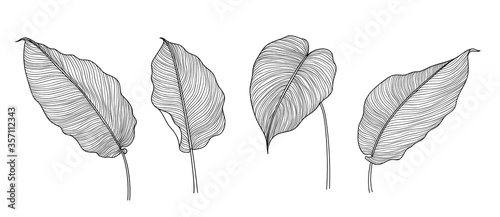 Obraz Exotic tropical leaf hand drawn vector. Botanical leaves black and white engraved ink art. Design for fabric, textile print, wrapping paper, fashion, interior design and cover. - fototapety do salonu