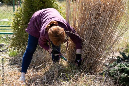 A woman with red hair on her recreation plot cuts a sharp decorative dry grass with a sharp saw Tapéta, Fotótapéta