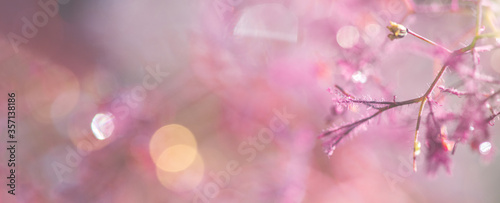 Naturhintergrund abstrakt mit feinen Zweigen und Wassertropfen in pink-orange- B Fototapeta