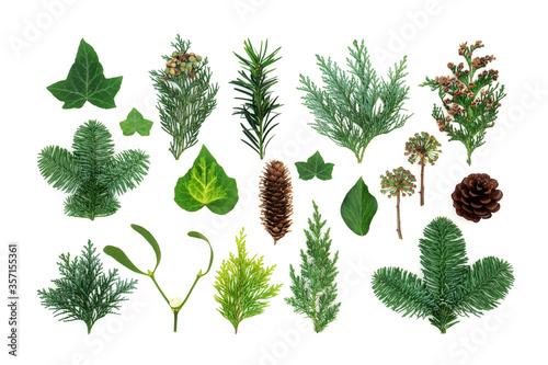 Natural winter greenery with flora & fauna of ivy, mistletoe, cedar cypress, spruce fir, yew & pine cones Canvas Print