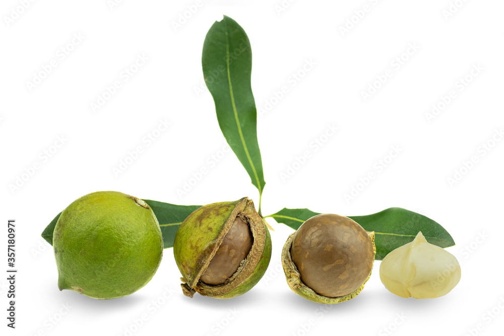 Fototapeta Group of peeled and unpeeled macadamia nuts at white background