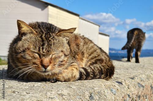 福岡県・相島 堤防で眠る猫と離れていく猫 Canvas Print