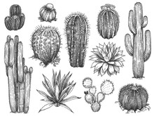 Sketch Cactus. Hand Drawn Wild...