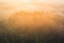 Misty Forest In Morning Sunlight