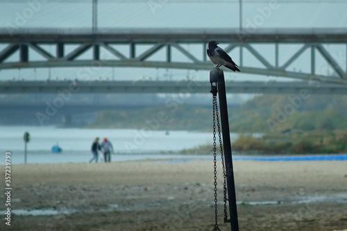 spacer nad brzegiem rzeki - fototapety na wymiar