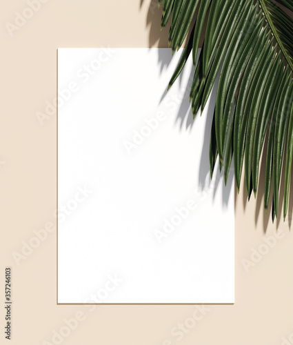 Minimal nature background for summer concept Canvas Print