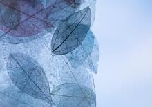 Macro Leaves Background Textur...