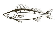 Walleye Fish Outline Engraving...