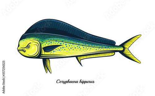 Obraz na plátně dolphin fish outline engraving vector illustration