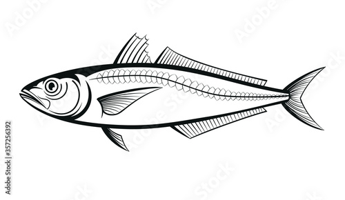 Fotografija scad fish outline engraving vector illustration