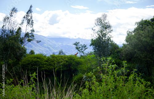 mountain landscape with blue sky © Bruno