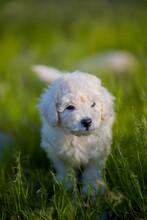 Cachorro En El Pasto