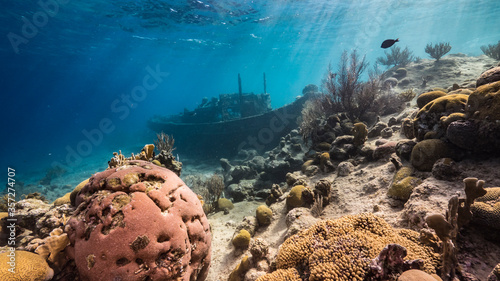 Fotografia Ship wreck Tugboat in  shallow water of coral reef in Caribbean sea / Curacao