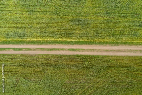 Photo Bright green agricultural farm field and cross country dirt road