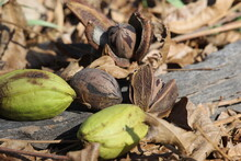 Pecan Nuts And Seeds Under A T...