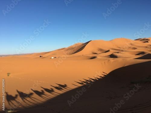 Camel caravan cruising, the Sahara Desert