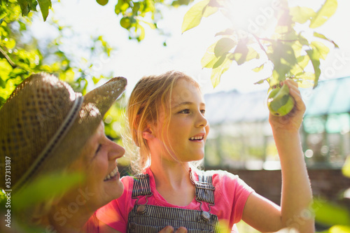 Obraz Grandmother and granddaughter picking apple from tree in sunny garden - fototapety do salonu