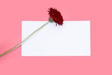 A Red Gerbera Flower Adorns A ...