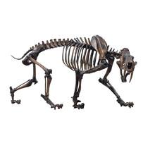 Sabre Cat Skeleton, Smilodon Fatalis Bones Skeleton With White Background