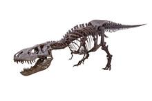 T. Rex Trix  Dinosaur Skeleton With White Background
