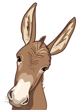 Curious Donkey Looking At You
