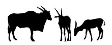 Wild  Antelope Family Silhouet...