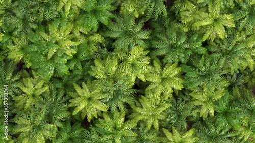 Obraz palm foliage background, aerial view - fototapety do salonu