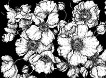 Black And White Poppy Pattern On The Black Background On Paper, Poppies Pattern, Hand Drawn Illustration, Line Art