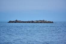北海道 ノシャップ岬のウミウの群れ