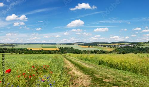 Wanderweg des Rheinsteigs durch Felder, Panoramablick auf die Landschaft bei Sankt Goarshausen Lierschied im Sommer –Hiking pathway of Rheinsteig trail #357499513