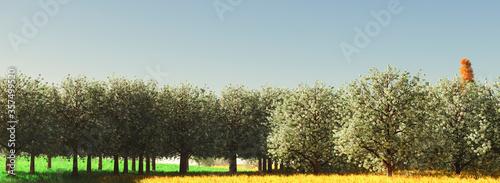 Photo almond trees