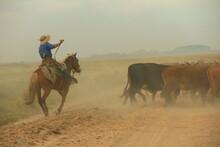 Gaucho A Caballo Arriando Vacas