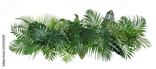 Fotografie, Obraz Different fresh tropical leaves on white background
