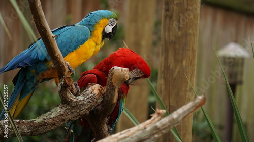 Fototapety, obrazy: Red and green macaw.