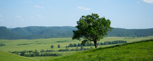 Lone Tree On A Hillside. Spreading Oak On The Background Of Distant Mountains. Beautiful Panorama Of Wildlife.