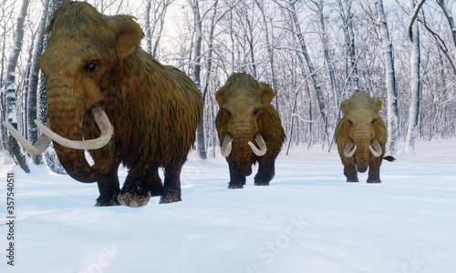 Obraz na płótnie A 3D illustration of a herd of Woolly Mammoths walking through a snowy forest