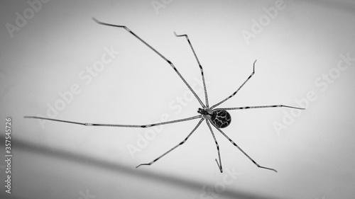 Dark Spider Canvas Print