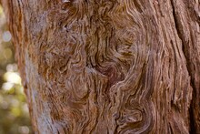 Beautiful Old Gnarled Tree Tru...
