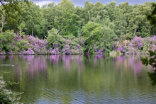 Beautiful Lakeside Scene Of Trees And Rhododendrons Reflected In Water