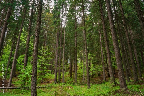 Tall trees in the forest during daytime