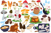 Mushroom Vector Illustrations....