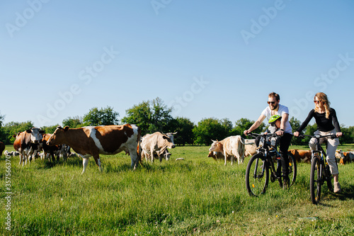 Obraz na plátně Parents and their baby riding past field with cows