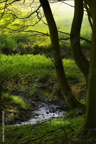 Wald mit Bach in Vertilal Obraz na płótnie